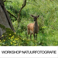 Natuurfotografie workshop